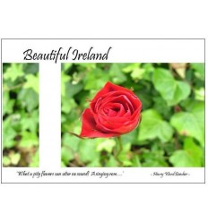 Beautiful Irish Rose