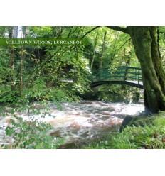 Milltown Woods, Lurganboy - blank card