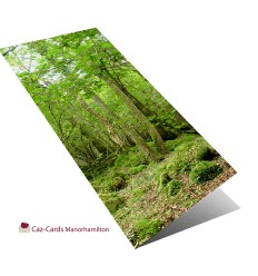 Irish Woodland Scene greeting card
