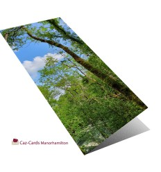Sky Through The Trees  greeting card