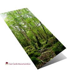 Tree Roots In A Tangle greeting card