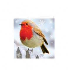 12 pack of Robin Christmas Cards.