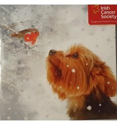 Irish Cancer Society - Dog and Robin