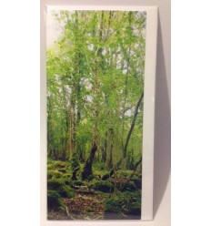 Irish Woodlands 1 - blank card